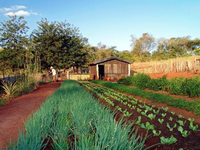 Curso gratis de agricultura ecologica