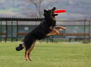 Curso de adiestramiento de perros