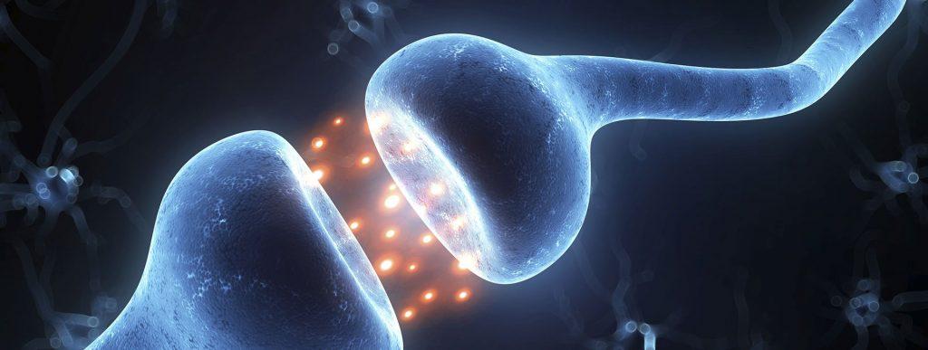 Libros gratis neurociencia