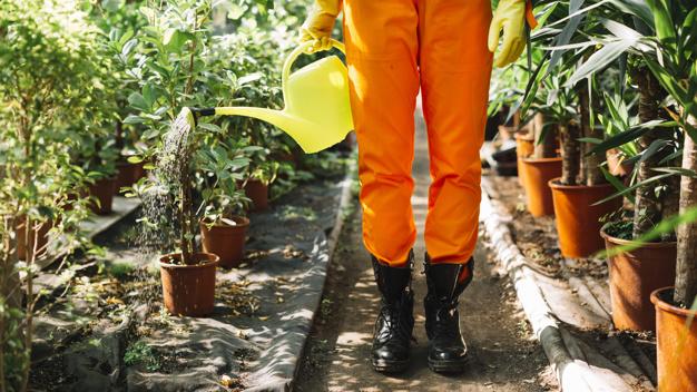 Curso gratuito sobre jardinería